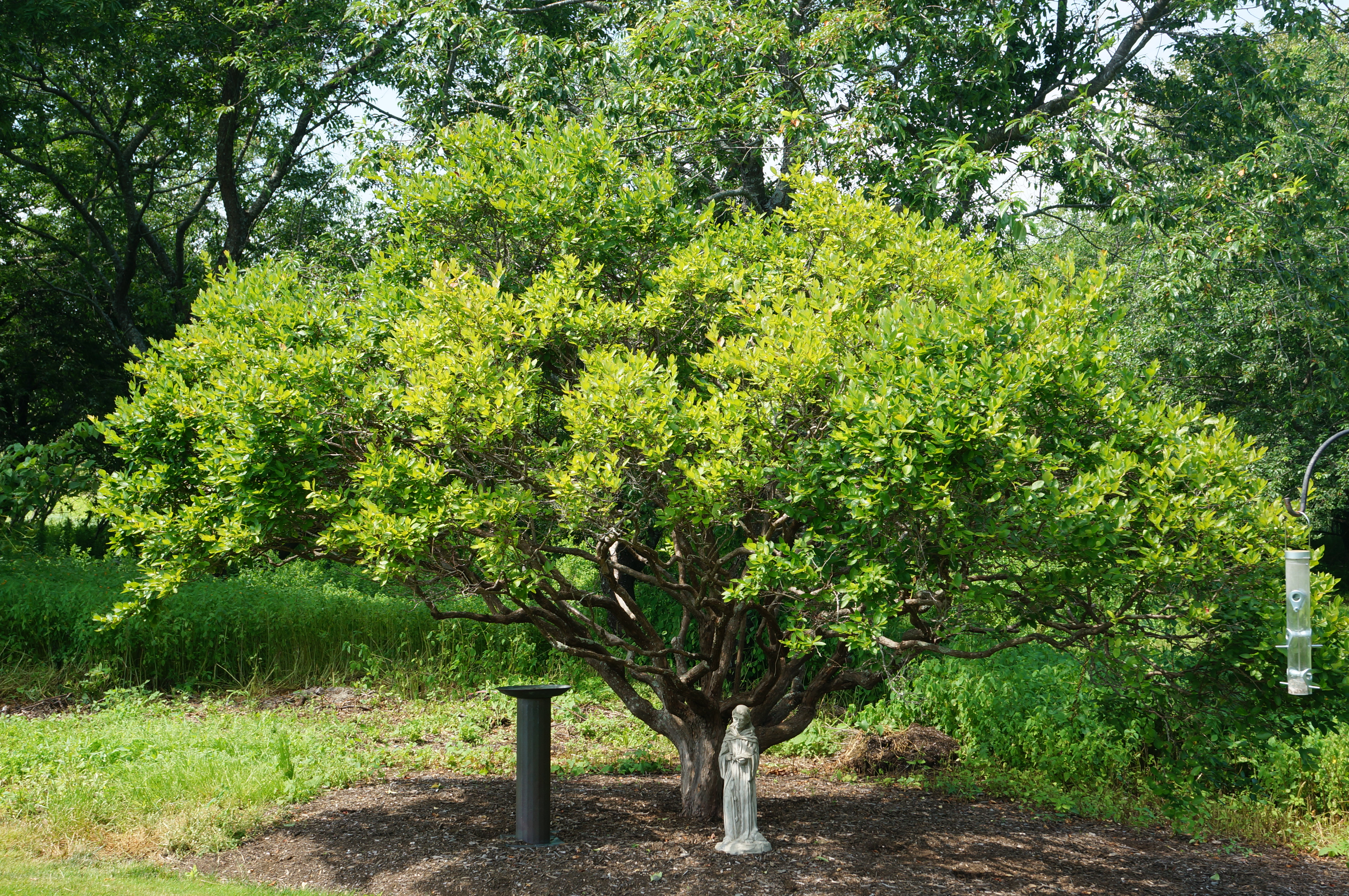 a blueberry tree – antilandscaper