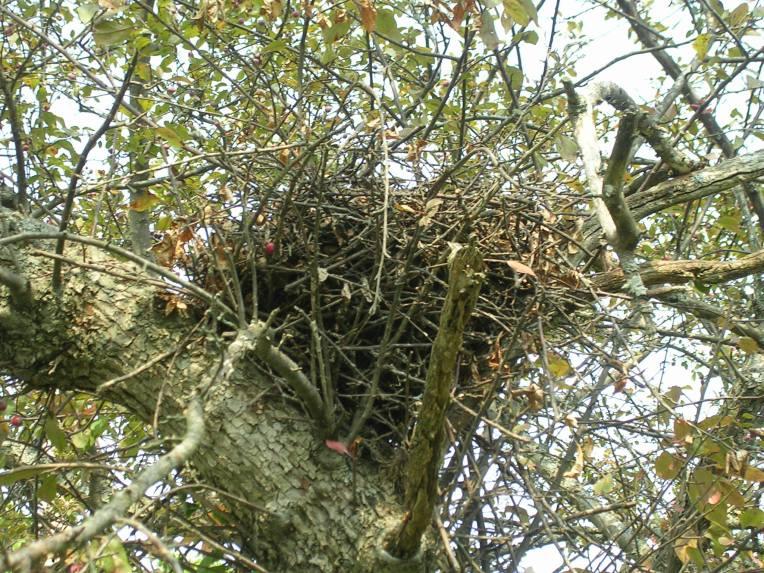 squrrel nest