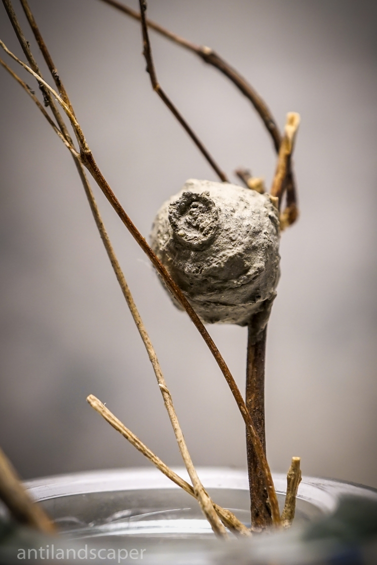 potter-wasp-nest